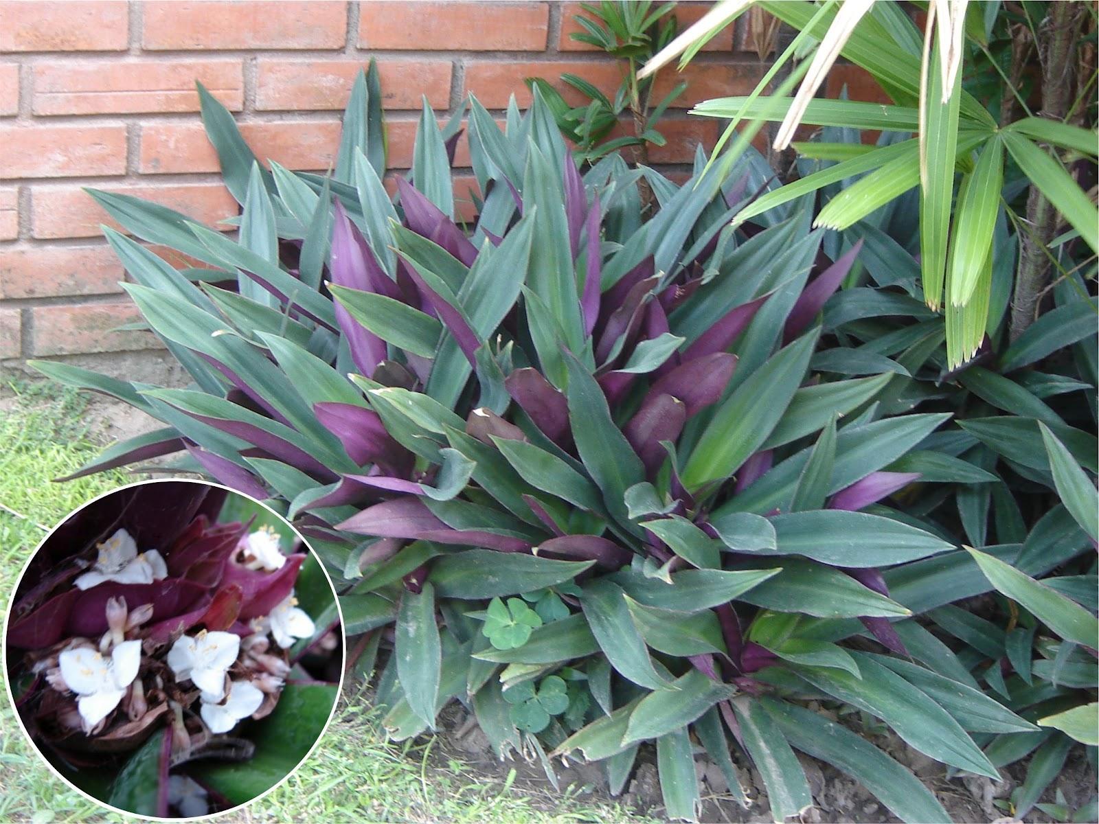 Maguey o agave: conoce sus increbles BENEFICIOS y usos 98